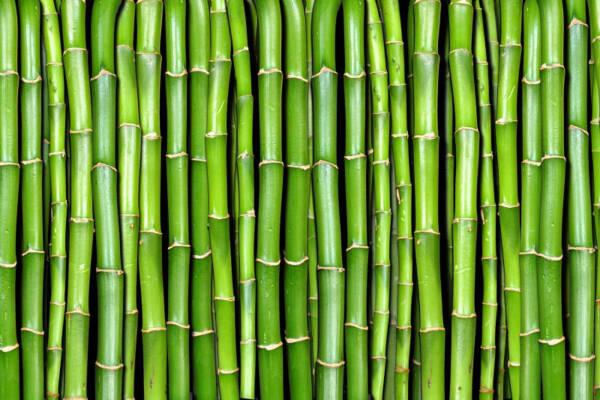 άρωμα τύπου bamboo του Gucci χύμα άρωμα